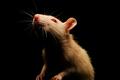 ¿Qué es el malware RAT y por qué es tan peligroso?