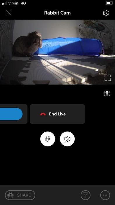 Inicie o feed ao vivo de sua câmera de estimação e toque no ícone de engrenagem no canto superior direito.